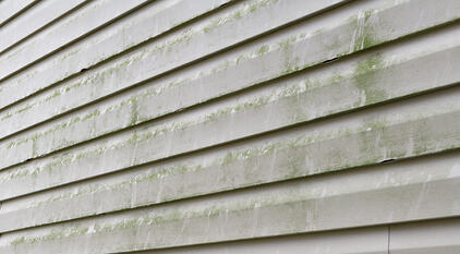 Vinyl Siding Algea Mold Example